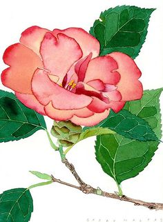 small camelia 1 by Mango Frooty, via Flickr