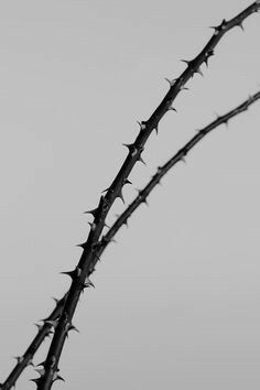 thorns, grey