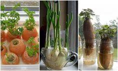 15 zöldség, amit evés után újra termeszthetsz! – morzsaFARM