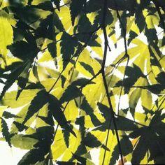 Leaves beautiful leaves