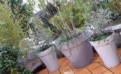 le cyclamen blanc, offert par mon amour de sœur, associé à un lierre et un pittosporum, m'a inspiré pour mes pots gris .... Merci...
