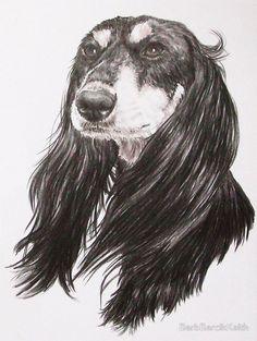 Saluki Portrait-  Miss my little Yasmin- this looks just like her