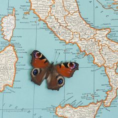 Vintage Map of Italy with Native Framed Butterfly by BugUnderGlass, $70.00
