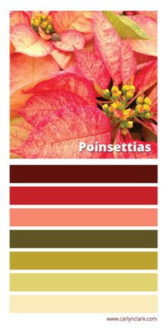 In honor of National Poinsettia Day, a new color palette — Carlyn Clark