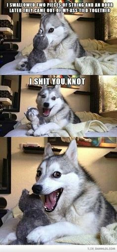 Made my day! Haha cute dog, I shit you knot...
