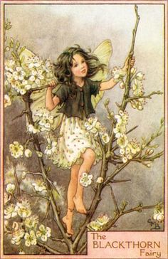 The Black Thorn Fairy Vintage Wall Art