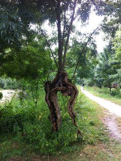 Walking Tree - Marais Poitevin - France