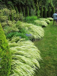 A river of japanese forest grass and black mondo grass for Low mounding ornamental grasses