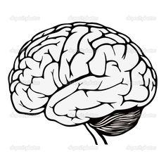human brain sketch a w so sweet brain drawing Brain Size Comparison human brain coloring page