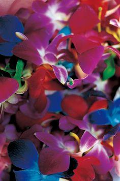 Photo by Mika Ninagawa Exotic Flowers, Tropical Flowers, Pretty Flowers, My Flower, Flower Art, Flower Power, Japanese Flowers, Japanese Art, Bright Art