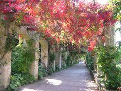 Autumnal foliage on the pergola walkway at Hever Castle Gardens, UK