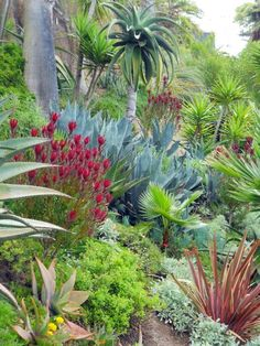 drought tolerant, but tropical looking