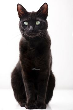 If kellin can't be my pet I will have an elegant black cat.