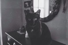 Wicket, my guardian - #catsofintagram #cat #blackcat #chat #gato #wicket #wiccac #witch #black