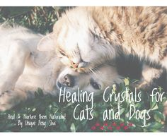 How can you heal and nurture your pet naturally? You can do so by using Healing Crystals and stones in many different ways. Learn more about them in this post. Healing Crystals, Healing Stones, Friends In Love, Best Friends, Animal Reiki, Pet Health, Love And Light, Natural Healing, Smudging