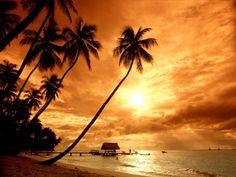 tramonti deserto animali - Cerca con Google