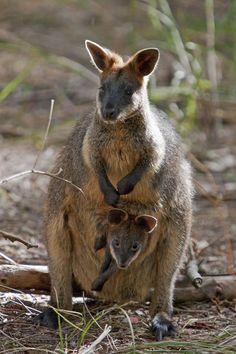 Phillip Island, Victoria, Australia (Nigel Pavitt)' by John Warburton-Lee