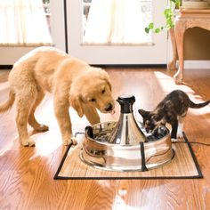 Petsmart.com - Boutique: Cat: Drinkwell 360 Stainless Steel Pet Fountain