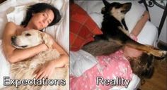 Bed dog or bed hog: the realities of sleeping with dogs » DogHeirs | Where Dogs Are Family « Keywords: sleep, bed, funny, humor