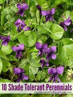10 Shade Tolerant Perennials  [One Hundred Dollars a Month]                                                                                                                                                      More #FlowerGardening