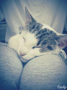My Cat~