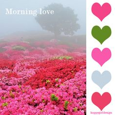 #color  morning love