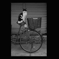https://flic.kr/p/Adktft   Cat November 2015  #cat #blackandwhitephotography