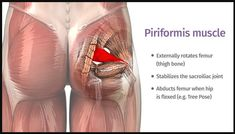 The piriformis : how can one little muscle cause so much trouble? Yoga poses and sequences to help with piriformis syndrome Sciatica Stretches, Sciatic Pain, Sciatic Nerve, Piriformis Exercises, Hip Flexor Exercises, Sciatica Symptoms, Muscle Stretches, Knee Exercises, Stretching Exercises