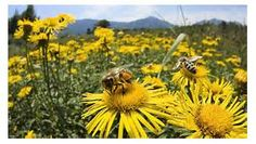 The bee is more honoured than other animals,
