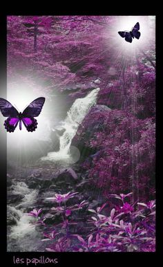 Photo: This Photo was uploaded by krnbrown. Find other pictures and photos or upload your own with Photobucket free image . Purple Love, All Things Purple, Shades Of Purple, Purple Stuff, Purple Art, Purple Butterfly, Butterfly Art, Butterfly Quotes, Butterfly Kisses