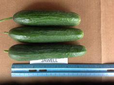 Jawell Persian Cucumber, Trials, Zucchini, Vegetables, Food, Essen, Vegetable Recipes, Meals, Yemek