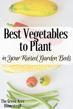 Gardening For Beginners *Best Vegetables to Plant in Your Raised Garden Beds* Are you starting to plan your Spring and Summer gardens? These are some of my favorite vegetables and the best vegetables to plant in your raised garden beds! Cheap Raised Garden Beds, Raised Garden Bed Plans, Building Raised Garden Beds, Planting Raised Garden Beds, Plants For Raised Beds, Raised Patio, Raised Gardens, Planting Vegetables, Organic Vegetables
