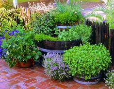 An edible garden