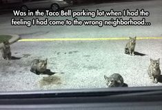 Funny Pictures Of The Day - 81 Pics