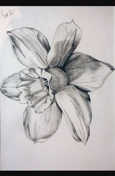 Want on left foot easy flower drawings, pencil drawings of flowers, Easy Flower Drawings, Flower Art Drawing, Pencil Drawings Of Flowers, Pencil Sketch Drawing, Art Drawings Sketches, Narcissus Flower Tattoos, Daffodil Tattoo, Lily Flower Tattoos, Stencil Art