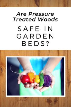 Do you need to worry about pressure treated wood in raised bed gardening? Diy Garden Projects, Raised Beds, Garden Beds, Gardening, Treats, Vegetables, Wood, Sweet Like Candy, Goodies