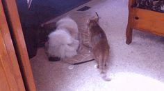 Funny Gif: Cat Attack!