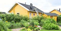 Rovaniemellä on maailman pohjoisin siirtopuutarhamökkialue. Siellä nauttii olostaan myös Marjatta Riskilä, joka viljelee puutarhassaan herkullisia hyötykasveja. Marjatan mökissä on kaikki mukavuudet saunaa ja pesukonetta myöten.