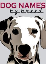 dog names by breed at puppy names hq