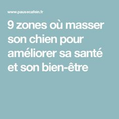 9 zones où masser son chien pour améliorer sa santé et son bien-être Shih Tzu, Education Canine, Yoga, Diy Stuffed Animals, Dog Cat, Wellness, Marcel, Chihuahua, Dresser