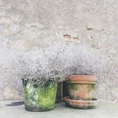 Interior Styling, Interior Design, Minimal, Roadtrip, Terracotta Pots, Garden Inspiration, Land Scape, Richmond London, London Garden