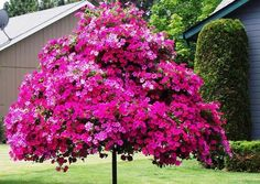 petunia centerpiece ideas for yard landscaping