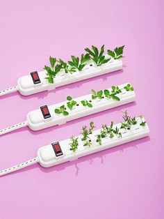 ENERGY! Power Strip Garden
