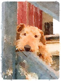 Pit Bull Terrier Dog Training: Lessons From An Expert - Champion Dogs Chien Fox Terrier, Fox Terriers, Wire Fox Terrier, Pitbull Terrier, Airedale Terrier, Watercolor Animals, Watercolor Paintings, Watercolors, Lakeland Terrier