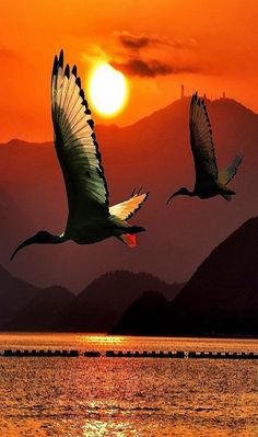Using natural light as a back light behind translucent sea bird wings... #DdO:) - GREAT PHOTO COMPOSITIONS - https://www.pinterest.com/DianaDeeOsborne/great-photo-compositions/ - Mountain lake with orange sunset beauty. Razao De Viver