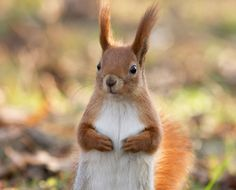 25 photos of adorable squirrles