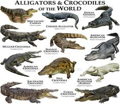Alligators and Crocodiles of the World by rogerdhall on DeviantArt