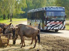 Safaripark Beekse Bergen Hilvarenbeek - bij Tilburg