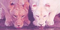 Top 25 des photos des animaux les plus rares de la planète - AdopteUnMec.com