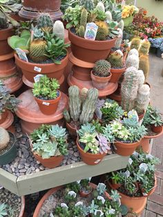 Large variety of cactus at J&M Home and Garden
